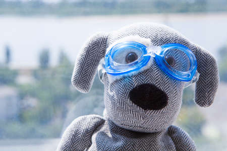 toy dog swimming pool glasses