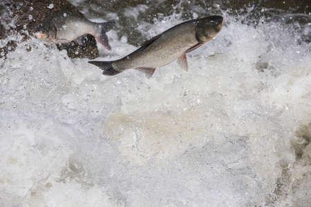 fish jump fresh water background Stock fotó