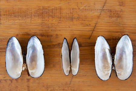 sea shell sharp wooden background