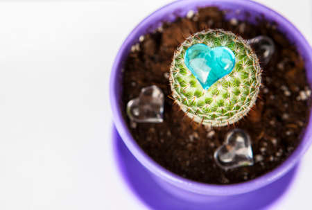 cactus glass heart white background