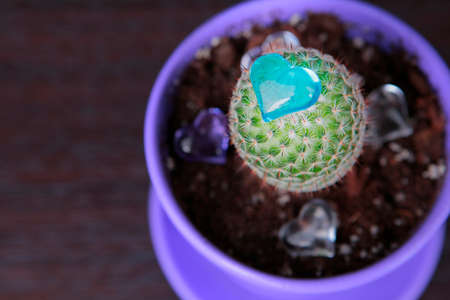 cactus glass heart wooden background 스톡 콘텐츠