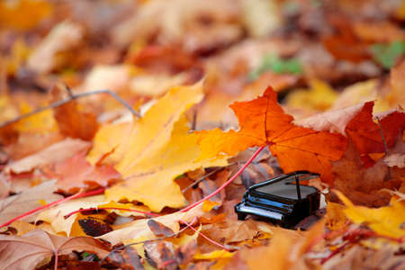 piano autumn forest maple leaf background Stock fotó