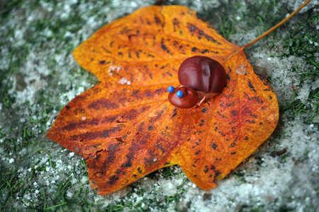 autumn leaf snow grass background