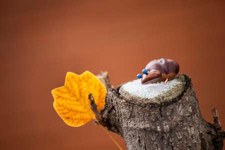 tree stub autumn leaf snow chestnut