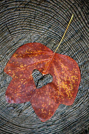 autumn leaf tree stub background Фото со стока