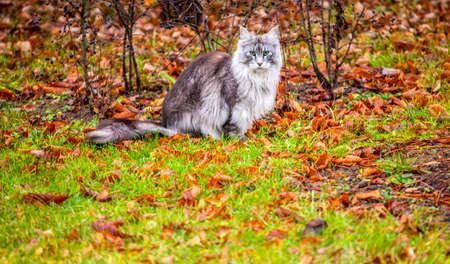 cat portrait grass autumn leaf