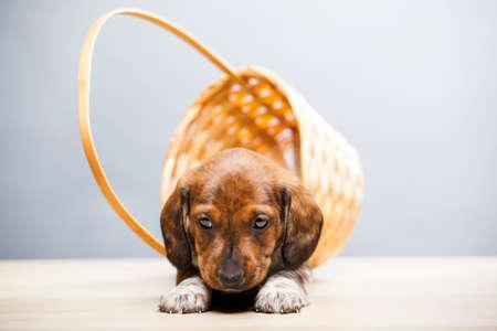 dog portrait basket table background