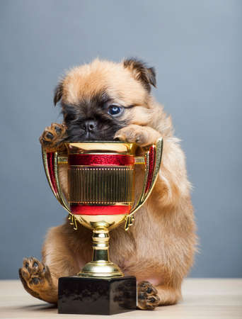 puppy portrait gold cup table Stock Photo