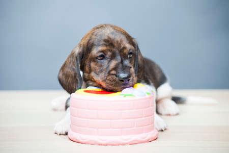 puppy portrait squishy dessert table