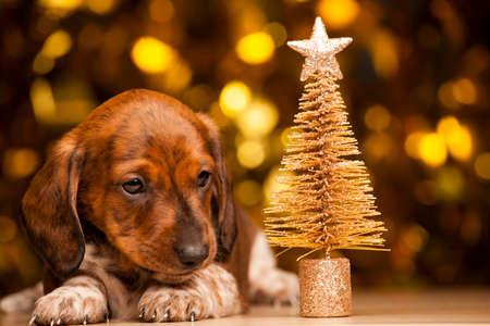 puppy portrait miniature fir tree