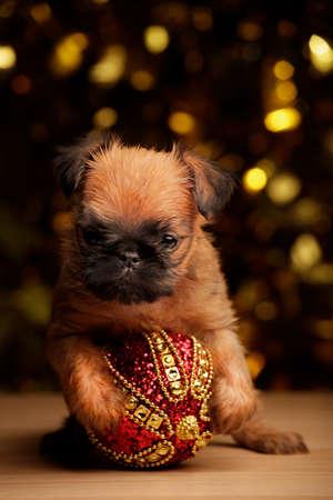 puppy portrait new year toy gold bokeh table Stok Fotoğraf