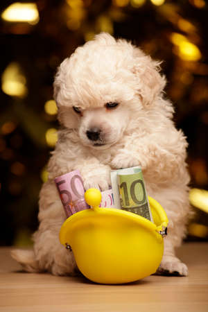 puppy purse money wooden table