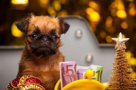 puppy purse money gold fir tree