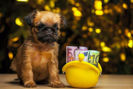puppy portrait purse money table gold bokeh