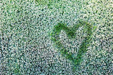 heart symbol frozen grass background Stok Fotoğraf