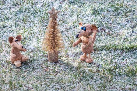 gold fir tree rat grass snow
