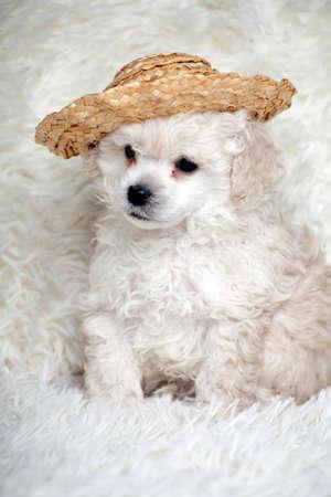 puppy portrait hat wool plaid background
