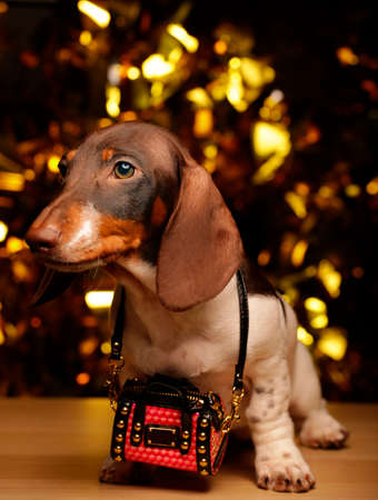 dog portrait bag gold bokeh