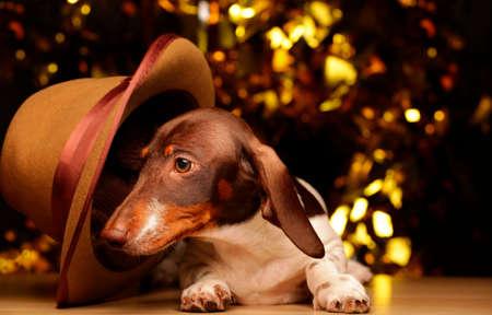 dog portrait hat gold bokeh