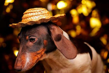dog portrait table gold bokeh