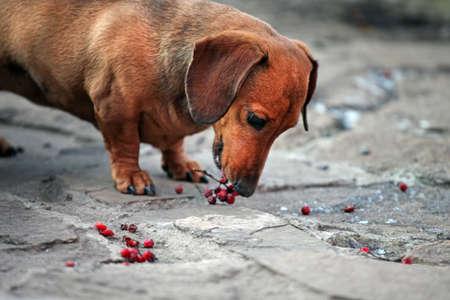 dog portrait berry stone road