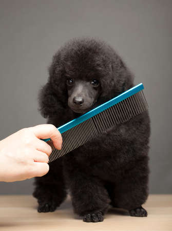 dog portrait hairbrush hand table Stock fotó