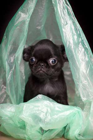 dog portrait garbage package background