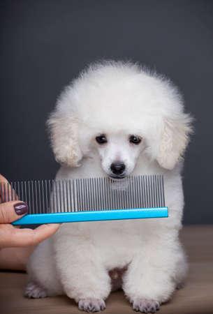 dog portrait hairbrush hand table Stock fotó - 138336554