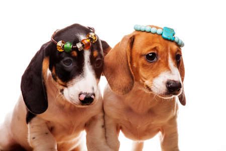 image of dogs with bracelet on white background Foto de archivo
