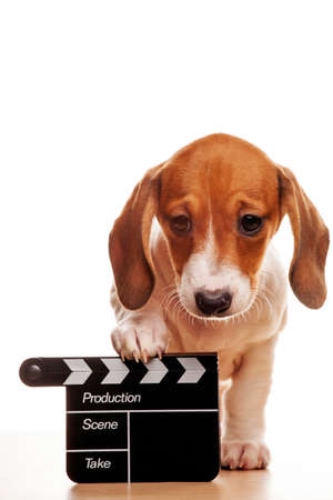 image of dog with a clapper board on white background