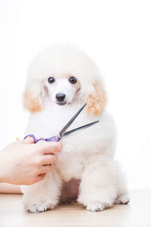 image of dog with scissors on hand, white background