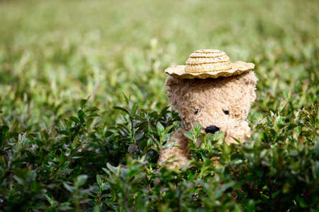 image of toy bear hat garden