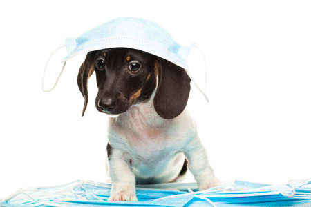image of dog with medical mask on white background