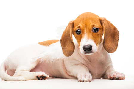 image of dog on white background