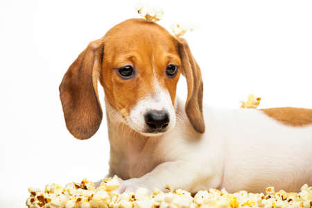 image of dog with popcorn on white background Stock fotó
