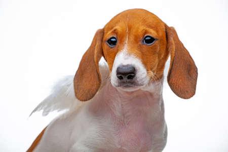 image of dog on white background