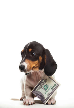 image of dog with money on white background