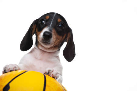 image of dog with basketball on white background