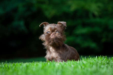 image of dog on grass background