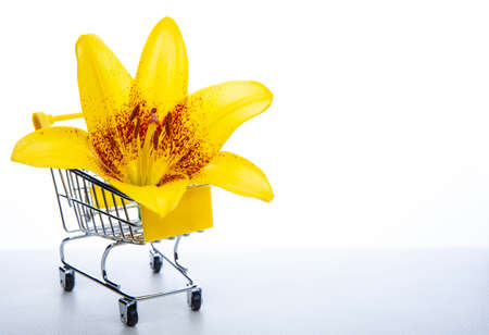 image of trolley flower white background Imagens