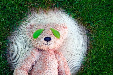 image of bear leaf stub grass background Фото со стока