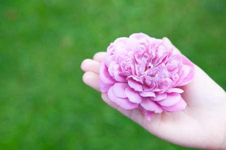 image of hand rose flower