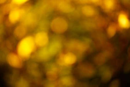 image of autumn tree bokeh Banque d'images