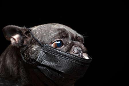 image of dog dark background