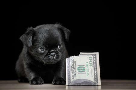 image of dog money dark background
