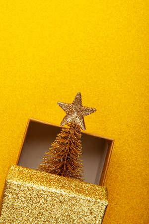 image of gold box fir tree