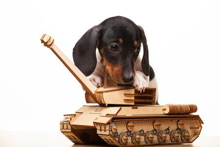 狗坦克白色背景的图象