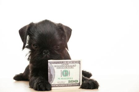 image of dog money white background