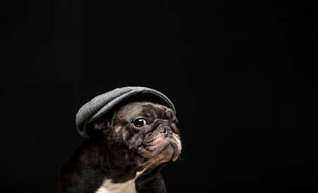 image of dog cap dark background