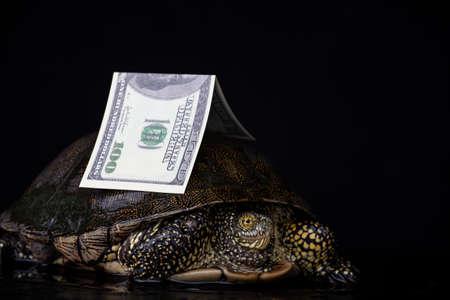 image of turtle money dark background